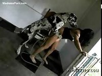 Horny female chick fucked her huge dog