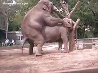 Zoo fetish movie featuring various animals banging in the wild