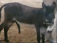 Fuck-hungry donkey sucks its own big cock