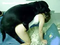 Dick deprived short haired petite skank gets hammered by a meaty dog in this beast movie