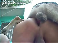 Wonderful collection of never before seen whores being screwed by animals for the first time