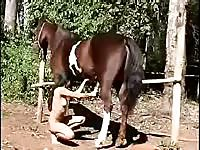 Horse Story DVD - Fresh-faced animal sex lover sucking horse shaft for a massive warm load of cum to consume