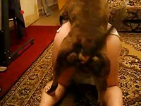 Stunning married babe getting drilled by a dog in this thrilling hardcore animal fetish scene