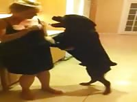 Playful blonde slut in slinky black dress flirting with her excited dog and almost getting fucked