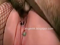 Fine bottomed cougar in crotchless fishnet pantyhose getting pussy fucked by an animal
