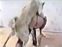Cock starved thick trollop getting screwed good by a big dog in this great beast sex video