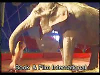 Petite amateur circus slut strips nude and poses by enormous elephant in this zoo fetish vid
