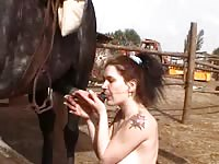 Coed showing off her fabulous cock sucking skills on a large horse in this bestiality sex movie
