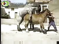 Rare zoo fetish footage captured by a ranch hand as two of his prized horses fuck each other