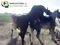 Exclusive stallion on horse sex movie captured by a zoo fetish enthusiast one afternoon