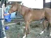 Ranch helper captures the moment one of the horses he tends to develops a raging hardon