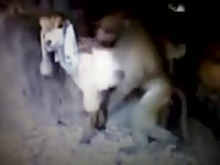 Rare zoo fetish footage features a wild monkey having its way with a four legged beast at night