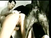 Pleasing married dark-haired slut sucking her dudes dick while being pleasured by an animal