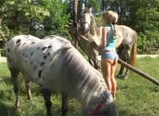 Horse Story DVD - Once shy animal sex friendly teen sucking a horse in hopes the beast will blow its load in her - Zoophilia Porn, Zoophilia Porn With Horse, Zoophilia Porn With Teen at MadnessPorn