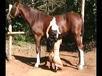Horse Story DVD - Brunette amateur college-aged hussy showing off her cock sucking abilities on a large horse