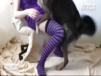 Art of Zoo - Fabulous young babe in purple thigh high stockings spreads for animal sex with her huge K9