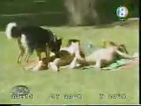 Amateur video captured in the park as unsuspecting woman have their clothes taken by K9