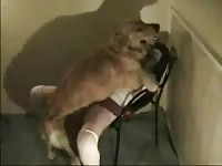 Teen slut getting her snug fuck hole screwed by an enormous dog in this bestiality movie