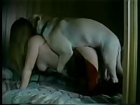 Never seen beforezoophilia friendly MILF blowing a dog in hopes she will earn cum to taste