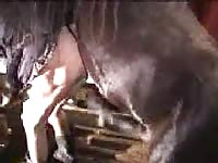 Brazen amateur cougar whore gets fucked by a horse in this homemade beast sex video