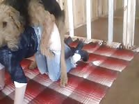 Well prepared married skank drops to the floor in bottomless jeans for bestiality sex with dog