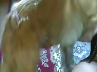 Chubby hussy getting her sweet hole humped by an endowed dog in this bestiality video