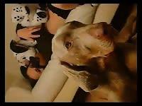 Strayx strayx doggygirl zooskool