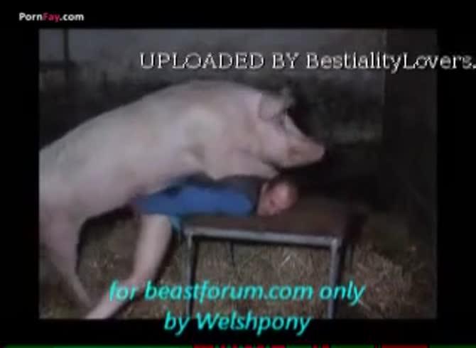 Pig man fucks Man with