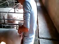 Pig Gaybeast - Man and animal Sex