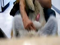 Jerking dog 1 Gaybeast - Man and animal Porn