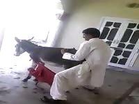 Jihadist and his donkey wife