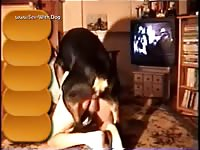 Male and male dog pics amp vid oct 18th 2005 horsedan almosttied