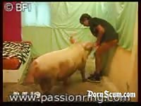 Man fucked by a boar pig men and animals Petlust